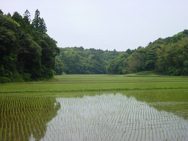 谷津田・鹿嶋市