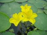 湖のお花畑