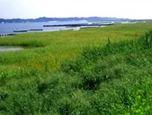 湖岸の自然再生