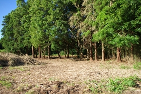 s周辺林整備後